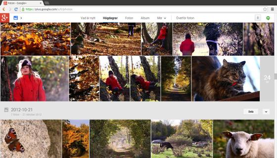 Google+ väljer ut dina bästa bilder automatiskt!